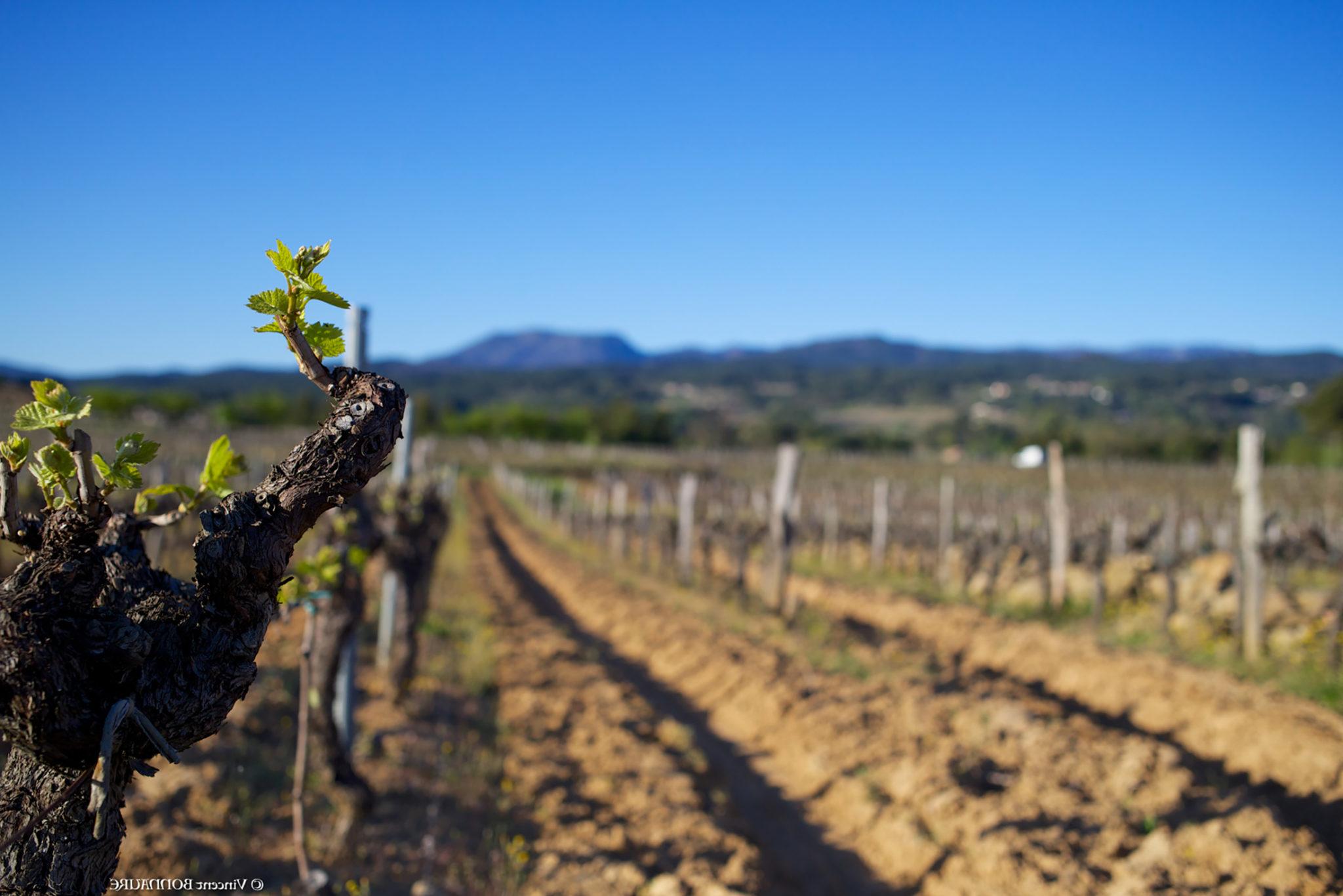 Terroir du Sud Ardèche